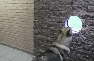 3 gat +hond